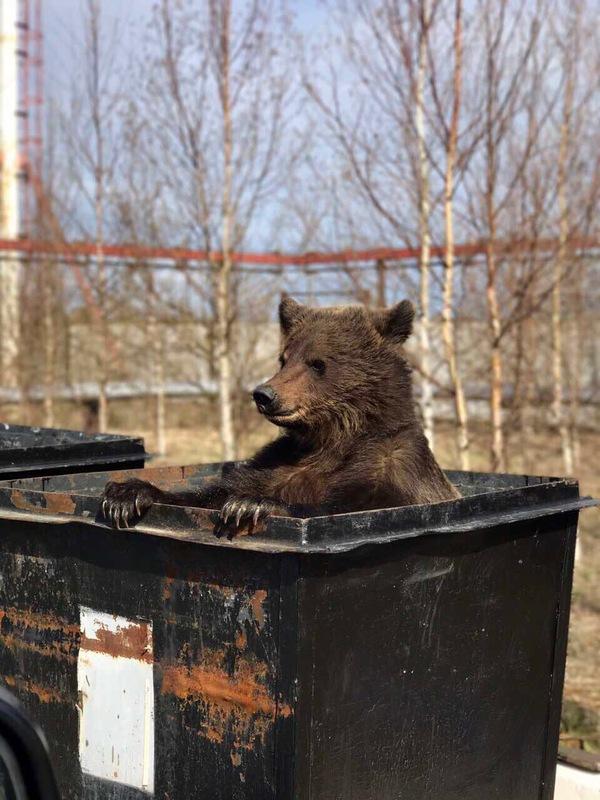 Какой-то изверг выбросил своего домашнего медведя Медведь, ХМАО, Животные