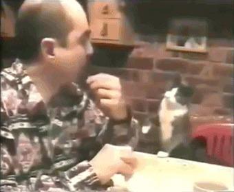 Хозяин этого кота - глухой, поэтому они общаются жестами. Кот, Попрошайки, Глухой, Кушать, Милота, Гифка
