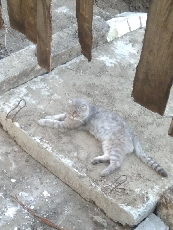 Найди кота Кот, Забор, Яма, Найдикота, Длиннопост