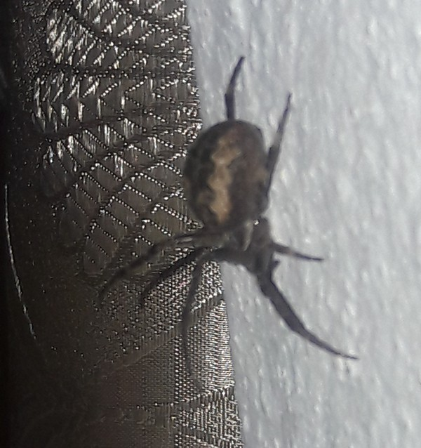 Дачные насекомые. Кто это? Паук, Кто это?, Арахнофобия, Длиннопост