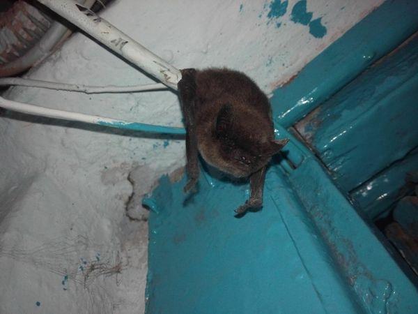 Граф спит после тяжелой ночи дракула, летучая мышь