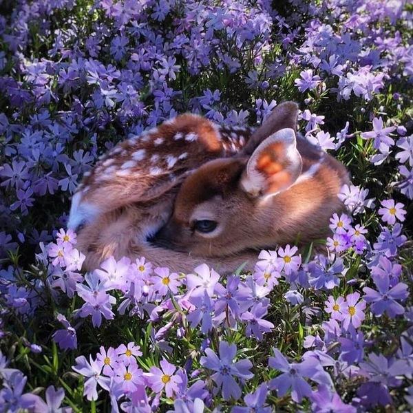 Олененок на цветочной полянке
