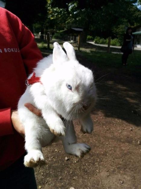 Исключительно несимпатичный заяц