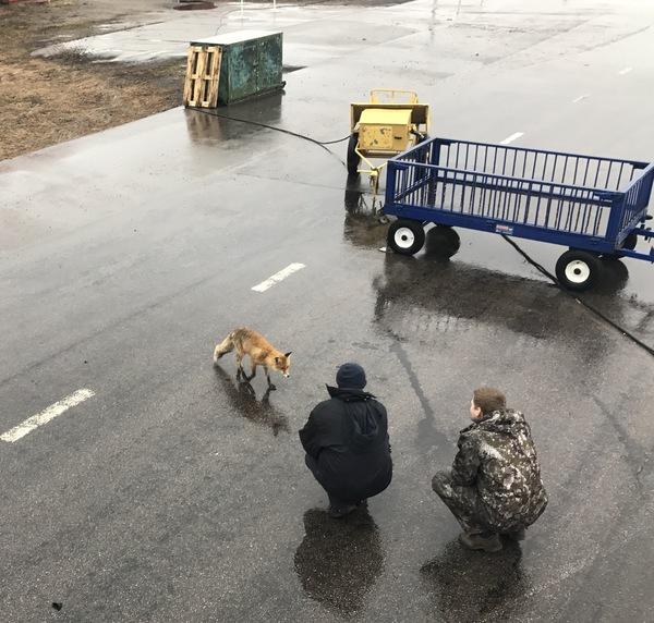 Пришла лисичка на ВПП Лиса, Аэродром, Что-То ещё