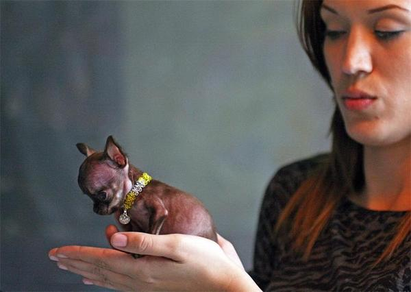 the smallest dog in the world - 800×568