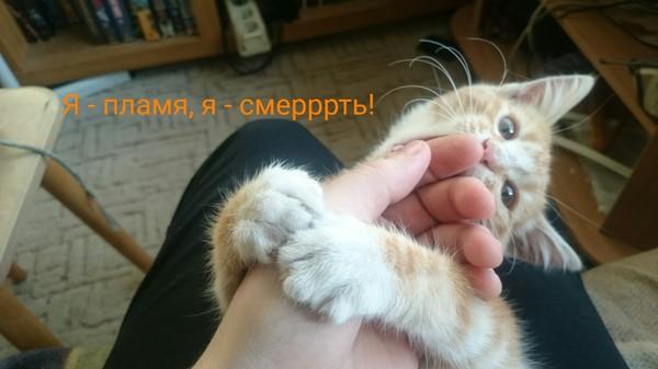Идиот с котенком на руках, день 3 кот, длиннопост, продолжение
