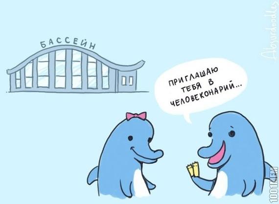 Как устроиться на работу в дельфинарий. Дельфинарий, Дельфин, Дельфинотерапия