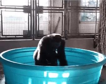 Когда наконец-то дали горячую воду.