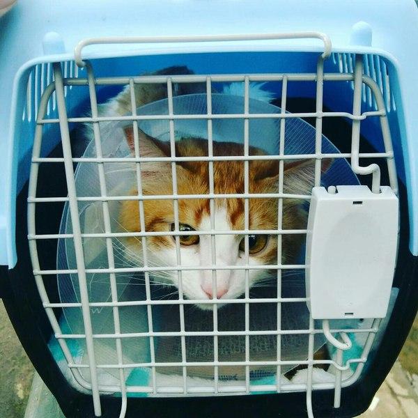 Здоровый кот - счастливая хозяйка ветеринария, кастрация, кот, Казань, боль, длиннопост