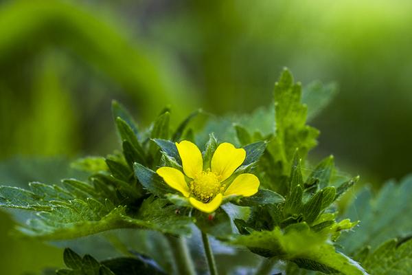 Зелёная гармония природа, макро, трава, зелень, красота, длиннопост