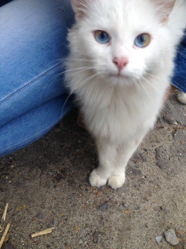 Встретил вот такого интересного кота.