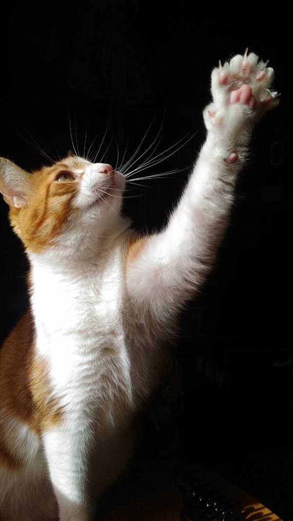 Любимая рыжая морда усатая кот, рыжий, зверье моё, усы, когти, найденыш, длиннопост
