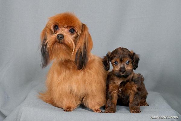 Про клиентов ветеринарных клиник. ветеринария, ветеринарная клиника, животные, кот, собака, клиенты, длиннопост