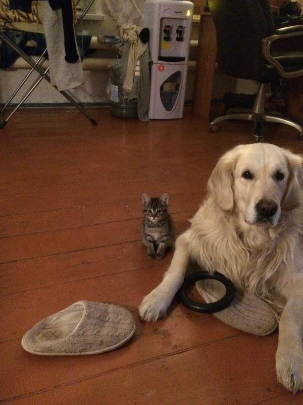 Бесплатная кисибушка с Авито Коты и собаки вместе, Бездомные животные, Длиннопост, Кот, Собака