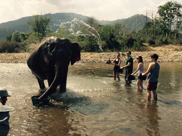 Вода, летящая на этого слона, тоже выглядит как слон