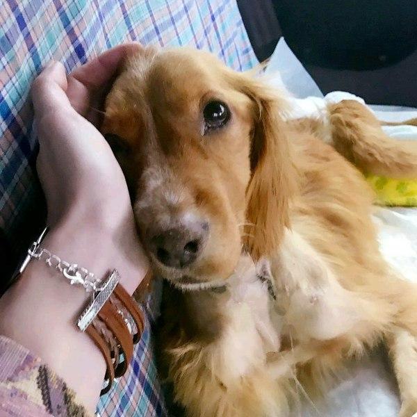 Волонтер животных Животные, Волонтерство, Приют, Как заработать деньги, Помощь животным, Собака