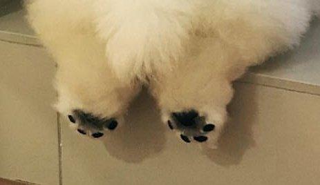 Пяточки Милота, Собака, Пятки, Фотография