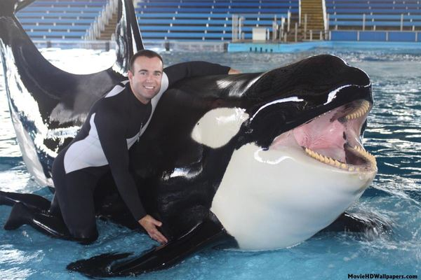 Битва титанов: белая акула против косатки биология, зоология, Косатка, акула, схватка, длиннопост
