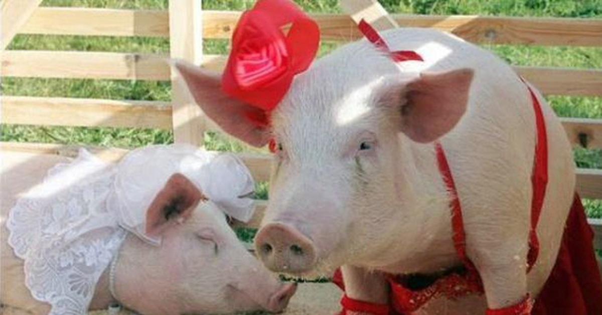 Анимированные машинами, приколы картинки со свиньями