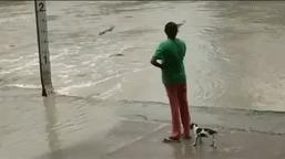 Ничего не обычного Женщина, Крокодил, Вода, Гифка