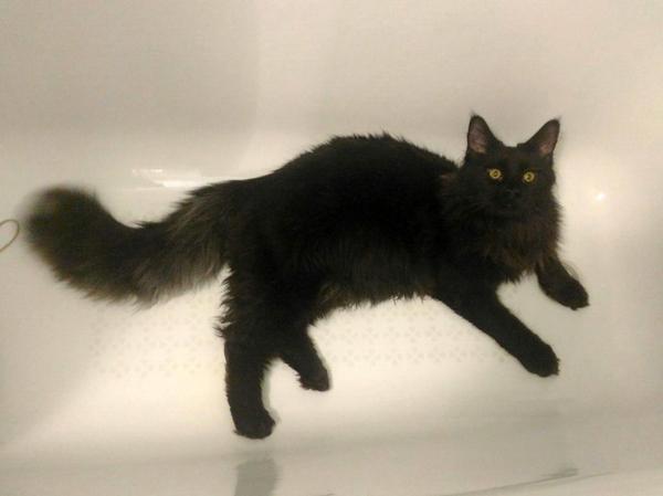 И так каждое утро... кот, милота, ванная, спать, очень странный кот