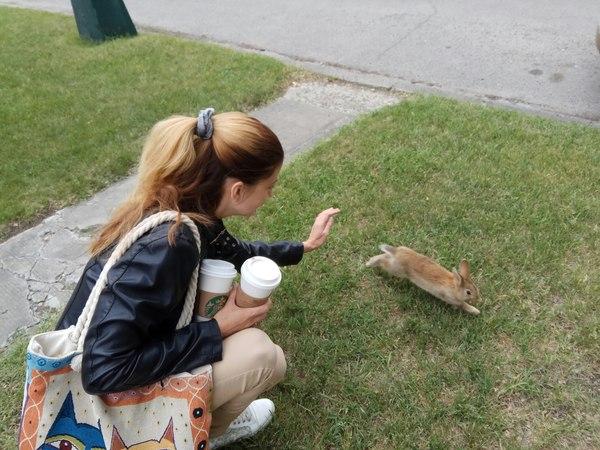 Животные в канадском мегаполисе Канада, Северная Америка, Дикие животные, Длиннопост