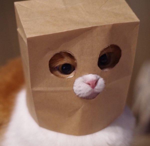 Кот аноним