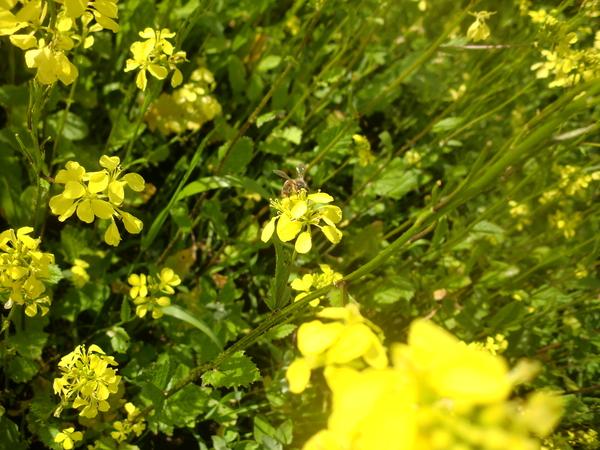 Новости с полей. пчеловодство, лето, деревня, длиннопост