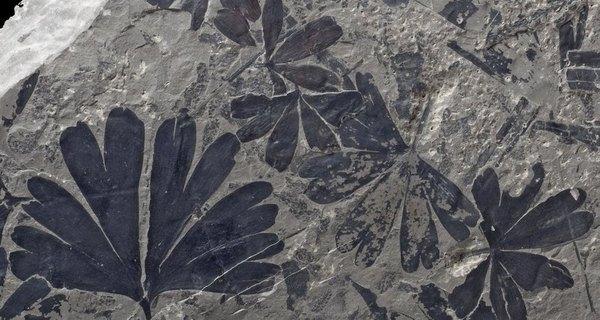 Первый шаг навстречу Парку юрского периода Палеонтология, Генетика