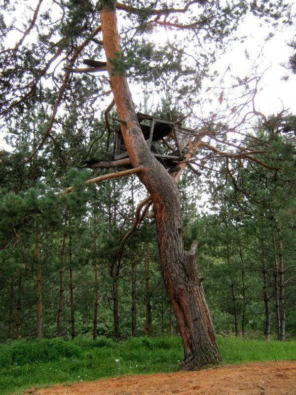 Когда деревья были большими Детство, Шалаш, Длиннопост, Дача, Соседи, История, История из детства