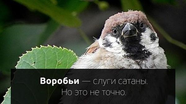 Воробьи Воробей, Хочу спать