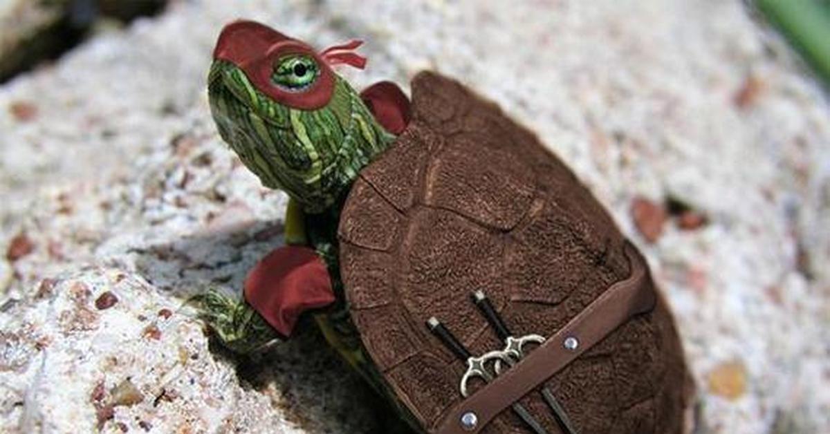 кожа лице черепаха от владхлеб фото рестораны арзамасе