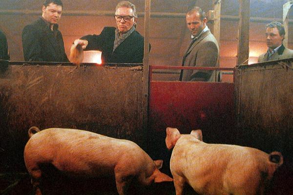 Казахстанец скормил фермера свиньям из-за 200 тысяч рублей под Омском. Свинья, Убийство, Фермер, Омск, Казахстан, Честно украдено