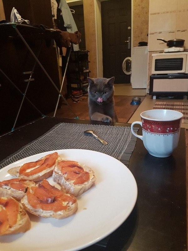 За секунду до кот, еда, предвкушение