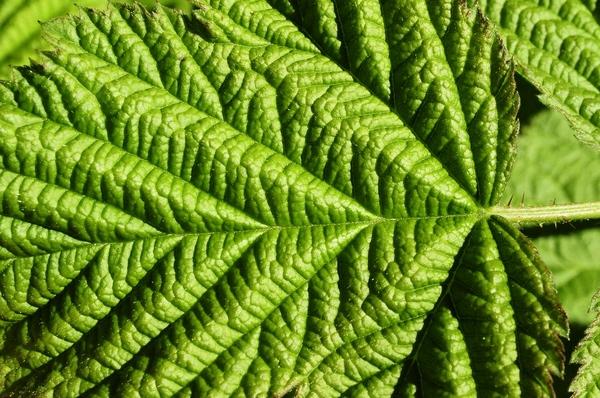 Зелень в ленту Лето, Зелень, Дача, Фотограф, Длиннопост