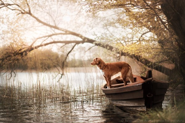 «В лодке». фотография, лодка, Река, собака
