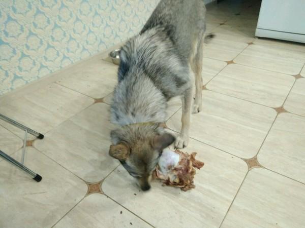 Женщина раскрывает как трахал ее пёс фото 601-849