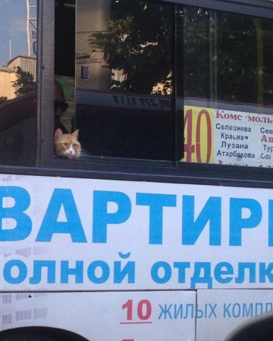 Привет, это кот. И он тоже едет на работу.Он как и ты не поедет на море этим летом
