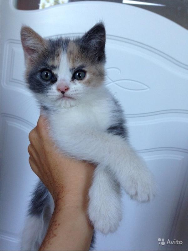 Мне кажется этот котенок ненавидит весь мир