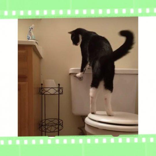 Кот, играющий с бачком унитаза, принес хозяину большие убытки кот-разоритель, бачок, видео, кот