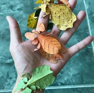 Насобирал целую пригоршню живых листьев
