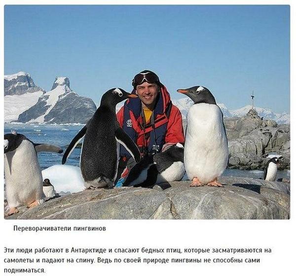 Необычные профессии пингвины, Профессия, редкая профессия