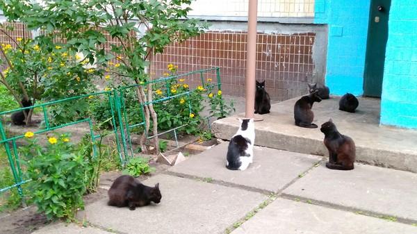 Говорят, не повезёт, если черный кот дорогу перейдет... Черный кот, Нечистая сила, Зло, Кот