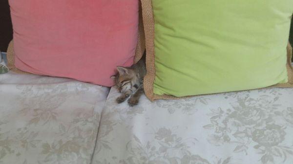 Завоеватель моей квартиры:з кот, милота, зверь, сон, мех, Няша