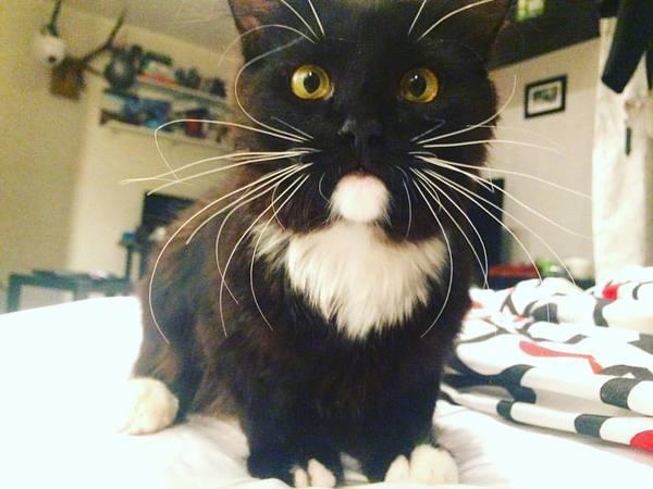 Как укротить сатану? Кошки и котята, Кот, Террористы, Обожемоймывсеумрем