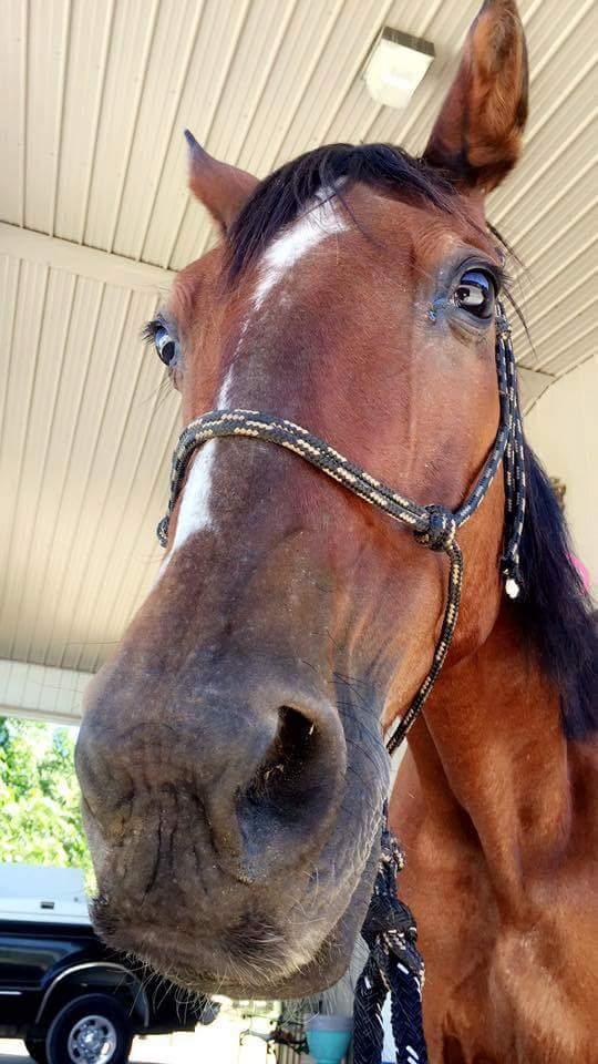 Спасение лошади Длиннопост, Лошади, Доброта, Спасение животных