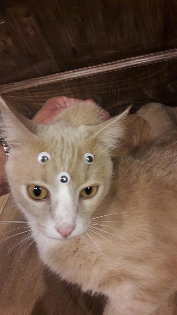 Передача по рен тв про котов