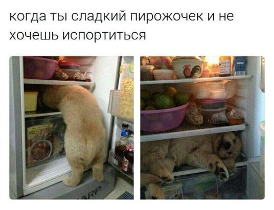 Пирожочек. Собака, холодильник, жара