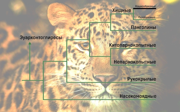 Древние кошки: саблезубы и не только палеонтология, животные, кот, саблезубые кошки, млекопитающие, древность, длиннопост