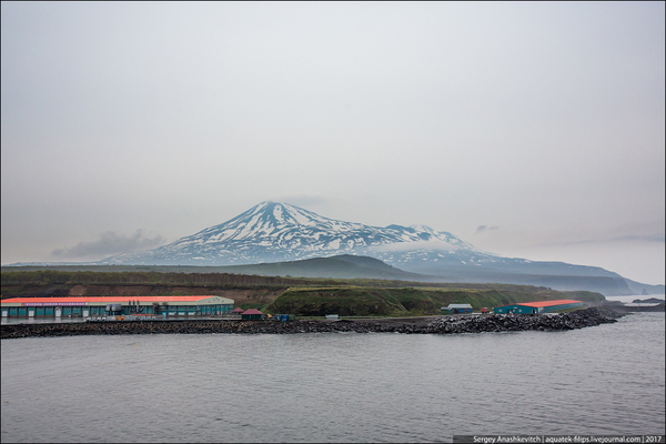 Почему в России не заканчивается красная икра Курильские острова, как это сделано, путешествия, фоторепортаж, красная икра, инкубатор, рыба, лосось, длиннопост